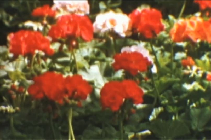 Roger Deutsch: Flower Songs (stll)