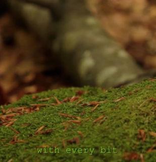 Silvia Amancei und Bogdan Armanu: Life of a Tree 09:41