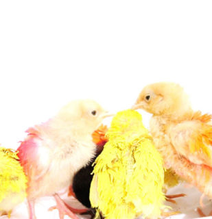 """Chicks+Cock,"" by MarieVicMarieVic (2016) as part of 'Mysteries of Love,' presented by ""Leo Kuelbs Collection"""